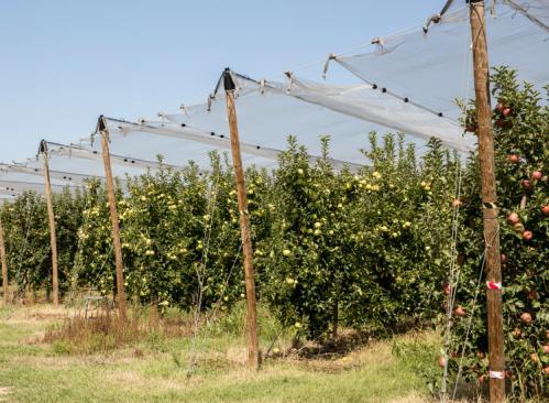 Redes contra el granizo para producción de fruta ecológica