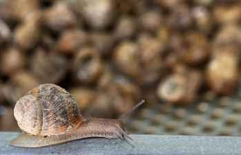 Riego solar para granja de ecológica de caracoles